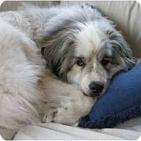 Great Pyrenees Dog for adoption in Minneapolis, Minnesota - FOSTER HELP NEEDED!