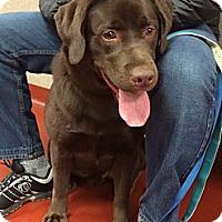 Adopt A Pet :: Sochi - Cumming, GA