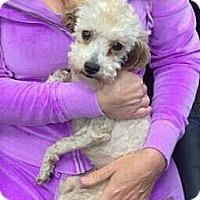 Adopt A Pet :: Bettina - Encinitas, CA