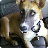 Adopt A Pet :: DAISY - Malibu, CA