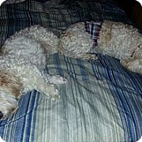 Adopt A Pet :: Spanky - Council Bluffs, IA