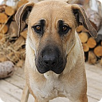 Adopt A Pet :: Cheyenne - Fountain, CO