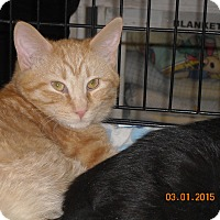Adopt A Pet :: Percy (and/or) Paxton - Riverside, RI