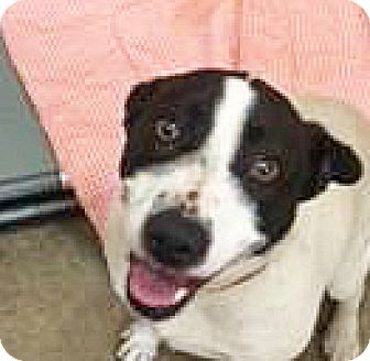 Border Collie/Pointer Mix Dog for adoption in Spokane, Washington - Princess