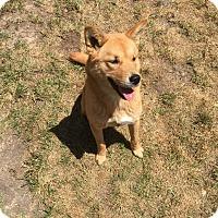 Adopt A Pet :: Evie - Los Angeles, CA