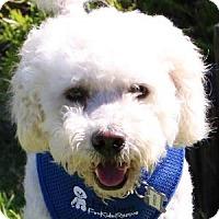 Adopt A Pet :: Spencer - La Costa, CA