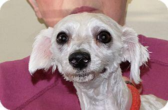 Terrier (Unknown Type, Small) Mix Dog for adoption in Spokane, Washington - Prance