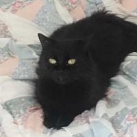 Adopt A Pet :: Allen - El Cajon, CA
