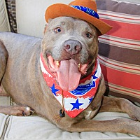 Adopt A Pet :: Stunning Dexter - Los Angeles, CA