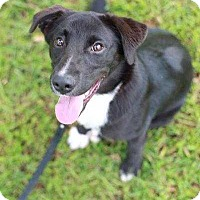 Adopt A Pet :: Callie - Barnesville, GA