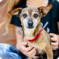 Adopt A Pet :: Ray *Courtesy Listing* - Los Angeles, CA