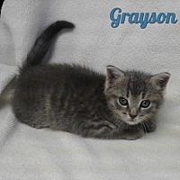 Adopt A Pet :: Grayson - Harrisville, WV