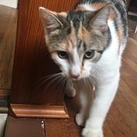 Adopt A Pet :: Phoebe - Edinburg, PA