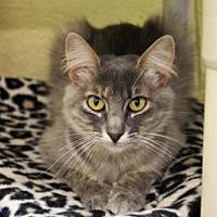 Adopt A Pet :: Sophia P Schmitzer - Denver, CO