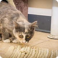 Adopt A Pet :: Misty - Gardnerville, NV