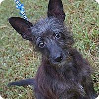 Adopt A Pet :: Sparky - West Nyack, NY