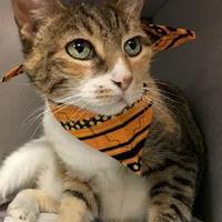 Adopt A Pet :: Kona - Voorhees, NJ