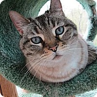 Adopt A Pet :: Chloe - Acme, PA