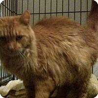 Adopt A Pet :: Red - Kensington, MD
