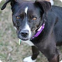 Adopt A Pet :: Nina - Hastings, NY