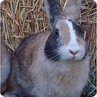 Adopt A Pet :: Medina - Santee, CA