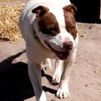 Adopt A Pet :: BAILEY - Pie Town, NM