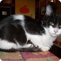Adopt A Pet :: Magpie - Dallas, TX