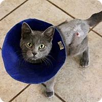 Adopt A Pet :: Hansel - San Antonio, TX