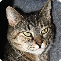 Adopt A Pet :: Queenie - North Branford, CT