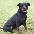 Adopt A Pet :: Darla - Denton, TX