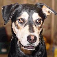 Adopt A Pet :: Samson - Rossville, TN