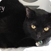 Adopt A Pet :: Lucy - Bradenton, FL