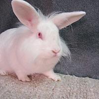 Adopt A Pet :: Elin - Newport, DE
