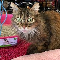 Adopt A Pet :: Maxine - Long Beach, CA