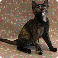 Adopt A Pet :: Hopper - Los Angeles, CA