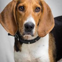 Adopt A Pet :: Ruff - Tulsa, OK