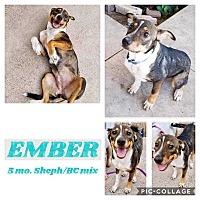 Adopt A Pet :: EMBER - Mesa, AZ