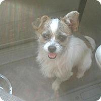 Adopt A Pet :: Baby Boy - Antioch, CA