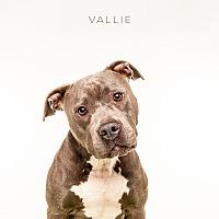 Adopt A Pet :: Vallie - Boston, MA