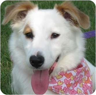 Collie Mix Dog for adoption in Portsmouth, Rhode Island - Skittles