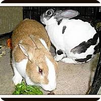 Adopt A Pet :: Georgia & Savannah - Williston, FL