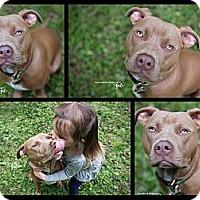 Adopt A Pet :: Monkey - Atlanta, GA