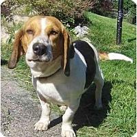 Adopt A Pet :: Jackie - Toronto/Etobicoke/GTA, ON