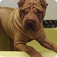 Adopt A Pet :: Ryder - Gainesville, FL