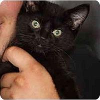 Adopt A Pet :: Lexi - Owasso, OK