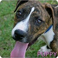 Adopt A Pet :: Brody - Meridian, MS