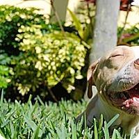 Adopt A Pet :: Lolita - Lake Worth, FL