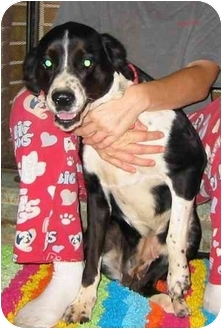 Border Collie Mix Dog for adoption in New Carlisle, Indiana - Lacy