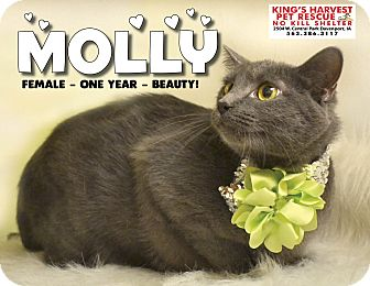 Domestic Shorthair Cat for adoption in Davenport, Iowa - Molly