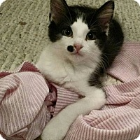 Adopt A Pet :: Aleksandr - St. Louis, MO